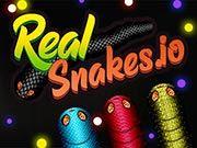 Echte Schlangen